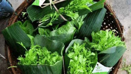 Organic farmers reassemble their Local in Central Vietnam