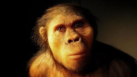 Weaning Behaviour and Diet of Australopithecus Africanus